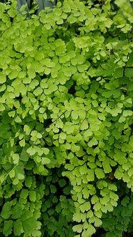 Flora, Leaf, Growth, Nature, Freshness, Green, Fresh