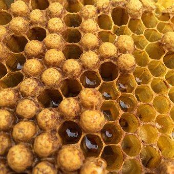 Beehive, Honey, Honeycomb, Bee, Hexagon, Wax, Yellow