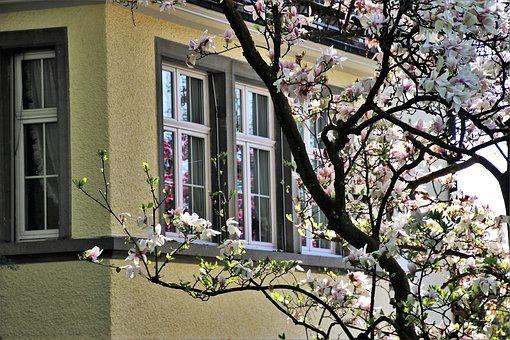 House, Tree, Window, Architecture, Flower, Garden