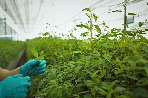 Plant, Leaf, Nature, Food, Vegetable, Farm, Greenhouse