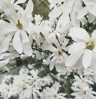 Flower, Plant, Nature, Season, Leaf