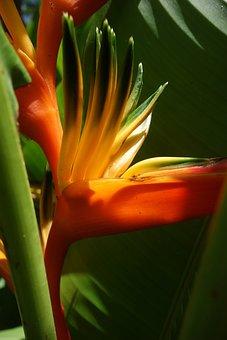 Nature, Flora, Leaf, Summer, Flower, Suriname