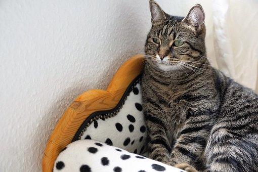 Cute, Animal, Cat, Domestic, Pet, Portrait, Mammal
