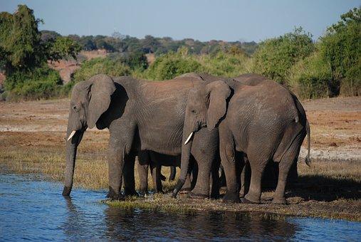 Wildlife, Elephant, Mammal, Safari, Nature, Animal