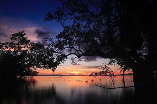 Tree, Sunset, Nature, Dawn, Dusk