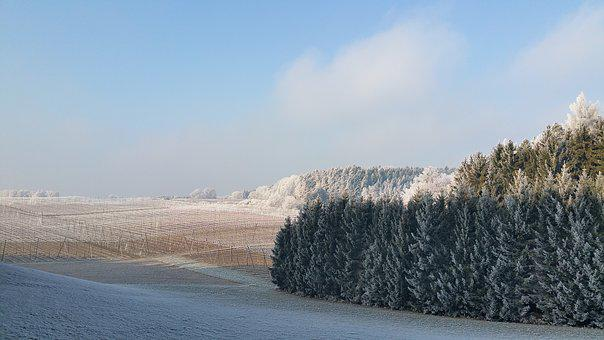Winter, Snow, Nature, Frost