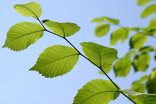 Leaf, Nature, Growth, Plant, Summer, Sky