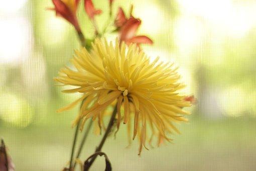 Nature, Flower, Flora, Summer, Outdoors
