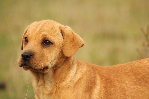 Animalia, Nice, Mammalia, Pet, Race, Hound, Dog