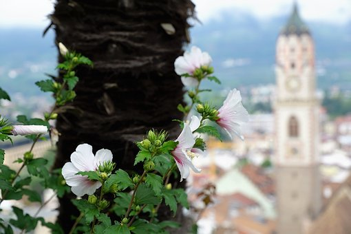 Flower, Architecture, Tree, Nature, Plant, Old, Summer