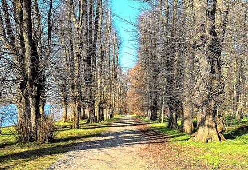 Lindenallee, Old Trees, Castle Park