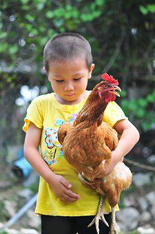 Chicken, Bantam, Cute, Carrying, Adorable, People, Boy