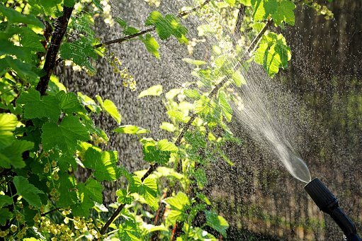 Aphids, Garden, Drops, Watering, Spray, Spraying, Pests