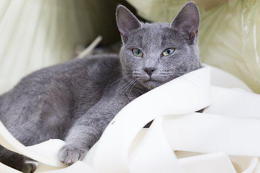 Animal, Cat, Domestic, Pet, Cute, Grey, Whisker
