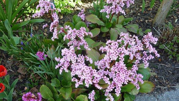 Flower, Pear Herb, Blossom, Bloom, Pink