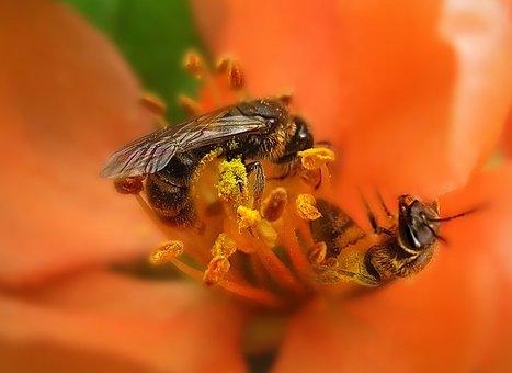 Spring, Flower, Pistils - Stamens, Insect