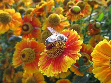 Bee, Flower, Nature, Plant, Insect, Animal, Summer