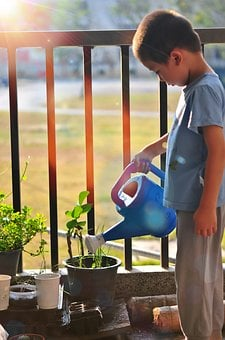 Tree, Watering, Child, Planting, Garden, Plant, Water