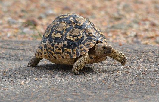Nature, Animal, Wildlife, Turtle, Reptile