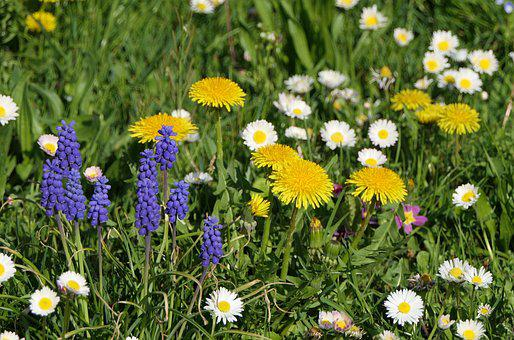 Flowers, Plant, Spring, Garden, Rush, Sunny, Colorful
