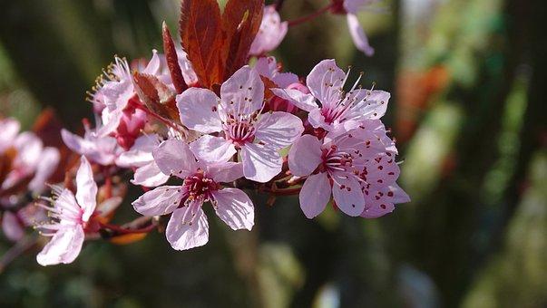 Nature, Plant, Garden, Season, Flowering, Sheet