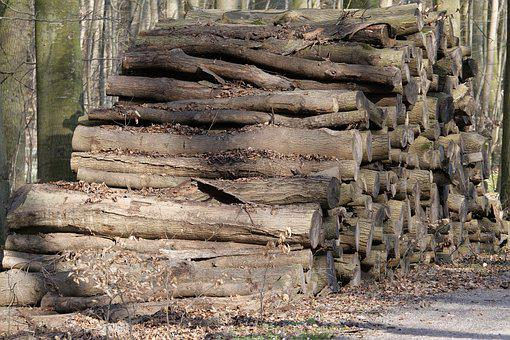 Nature, Tree, Wood, Stack, Growing Stock, Tribe