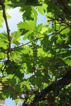 Plant, Leaves, Nature, Freshness, Tree, Bud, Flower