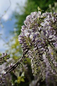 Flower, Nature, Plant, Tree, Blooming, Season