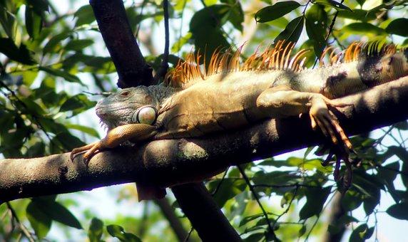 Tree, Nature, Tropical, Jungle, Wildlife, Animal
