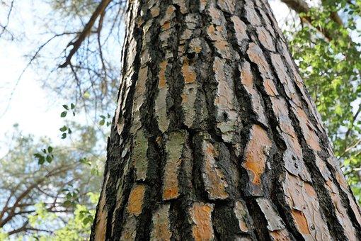 Tree, Wood, Nature, Bark, Plant, Leaf, Tribe, Large