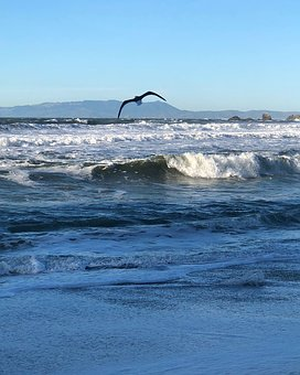 Water, Sea, Surf, Ocean, Wave, Nature, Seashore, Beach