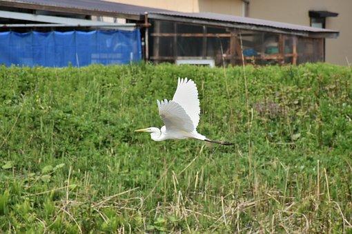 Animal, River, Waterside, Grass, Bird, Wild Birds