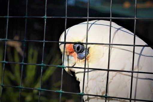 Depression, Cage, Fence, Animal, Bird, Wildlife