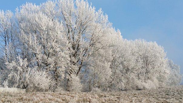 Frost, Tree, Winter, Snow