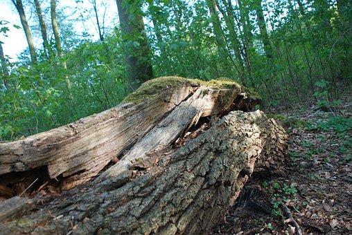 Wood, Nature, Tree, Tribe