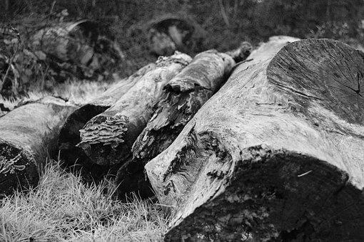 Tree, Trunk, Nature, Outdoors, Rustic, Wood