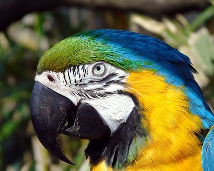 Bird, Parrot, Beak, Feather, Macaw, Blue, Yellow