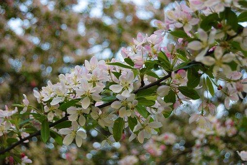 Flower, White, Branch, Leaf, Flora
