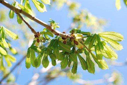 Nature, Leaf, Flora, Growth, Tree, Spring, Branch