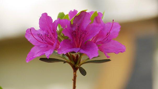 Nature, Flowers, Plants, Outdoors, Leaf, Petal, Bud