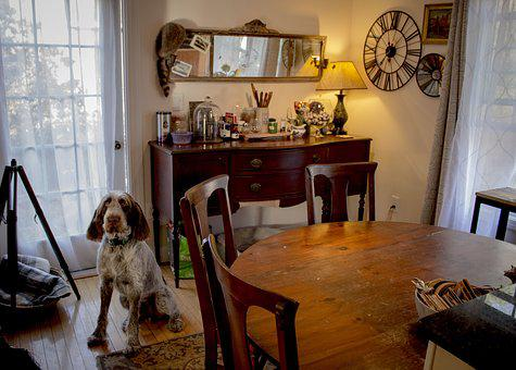 Table, Furniture, Room, Indoors, Chair, Dog, Interior