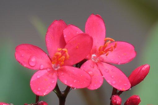 Nature, Plant, Flower, Leaf, Summer