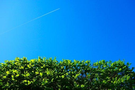 Hedge, Shorn Hedge, Foliage, Sky, Blue Skies