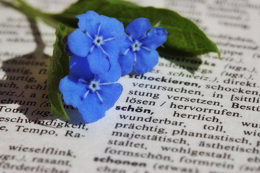 Book, Paper, Close, Flower, Forget Me Not, Blue
