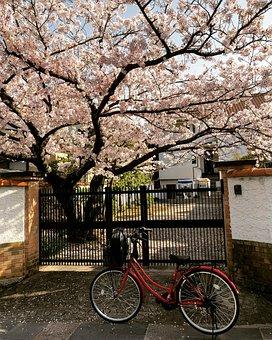 Tree, Flower, House, Garden, Cherry, Sakura, Japan