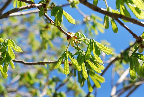 Tree, Leaf, Flora, Nature, Branch, Growth, Spring