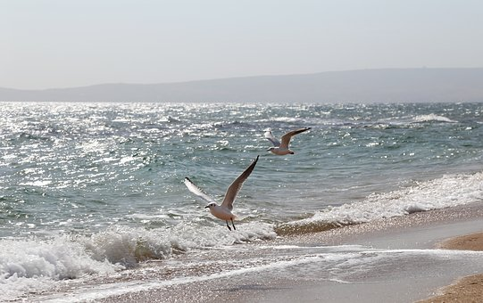 Sea, Gulls