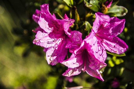 Flower, Nature, Plant, Garden, No Person, Healthy