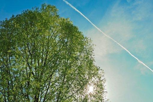 Nature, Landscape, Sky, Tree, Cloud, Summer