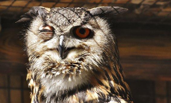 Owl, Bird, Feather, Eagle Owl, Animals, Wild Bird, Cute